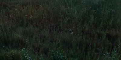 أراضي زراعية 48562م للبيع كاش بمركز أسوان أسوان